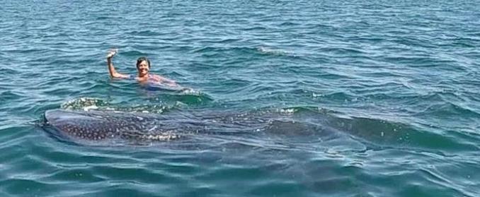 Whale Shark7(0)